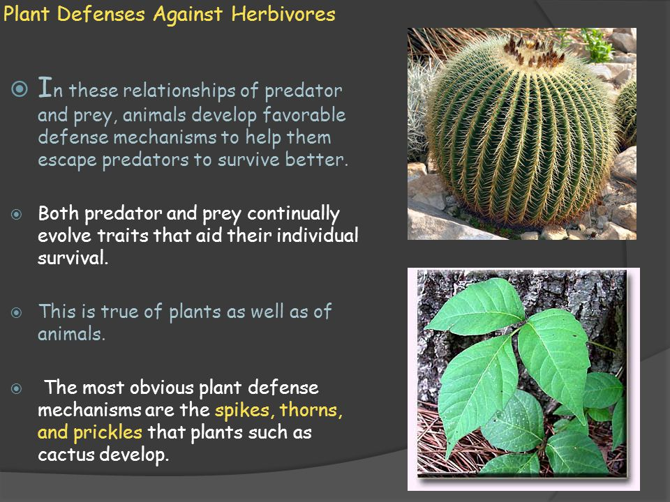 Plant Defenses Against Herbivores