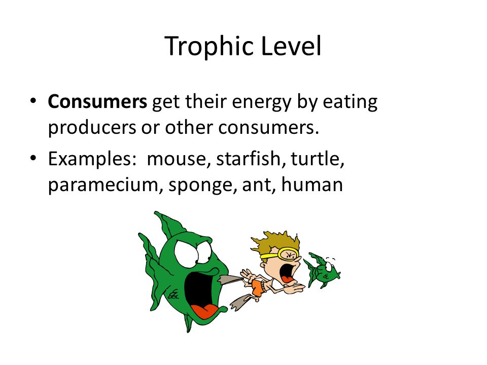 Trophic Level Consumers get their energy by eating producers or other consumers.