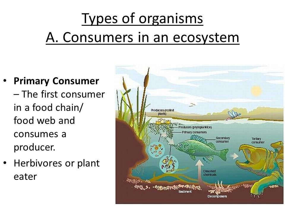 Types of organisms A. Consumers in an ecosystem
