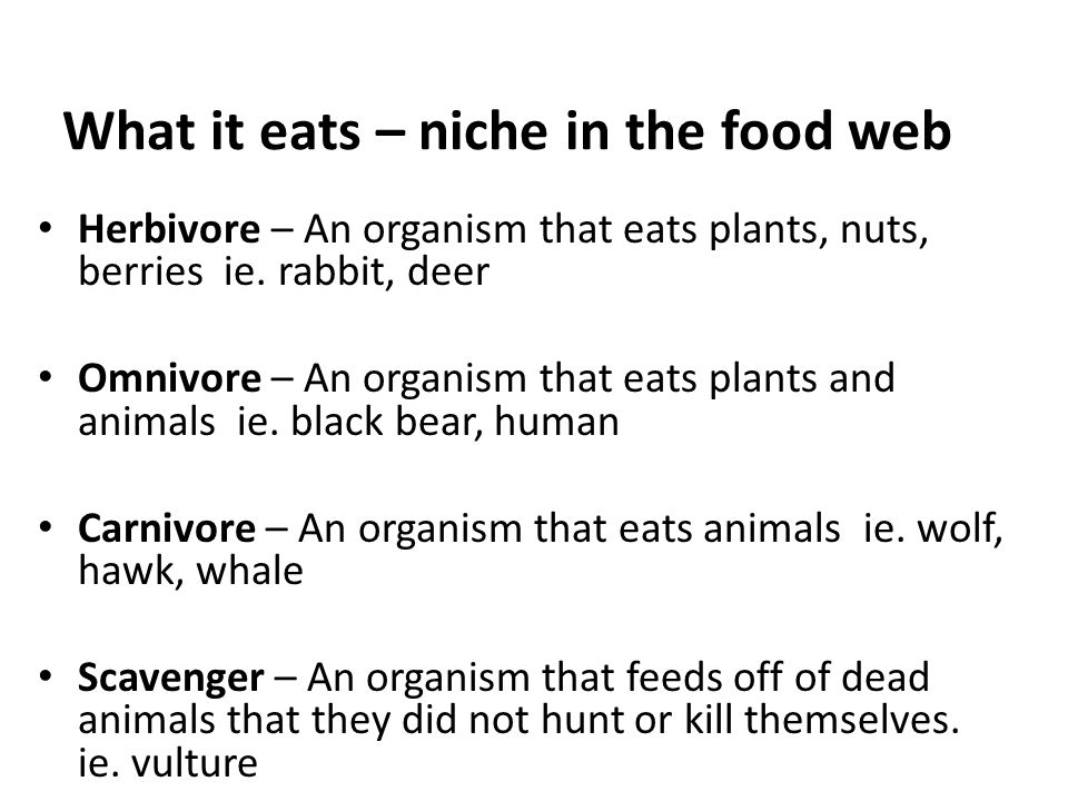 What it eats – niche in the food web