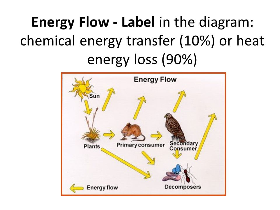 Energy Flow - Label in the diagram: chemical energy transfer (10%) or heat energy loss (90%)