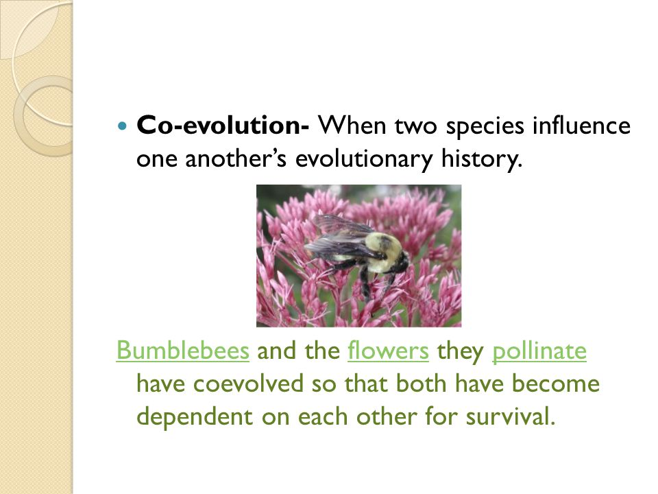 Co-evolution- When two species influence one another's evolutionary history.