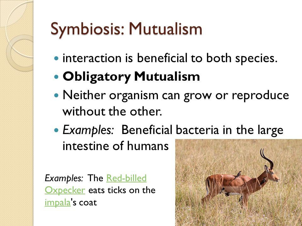 Symbiosis: Mutualism interaction is beneficial to both species.