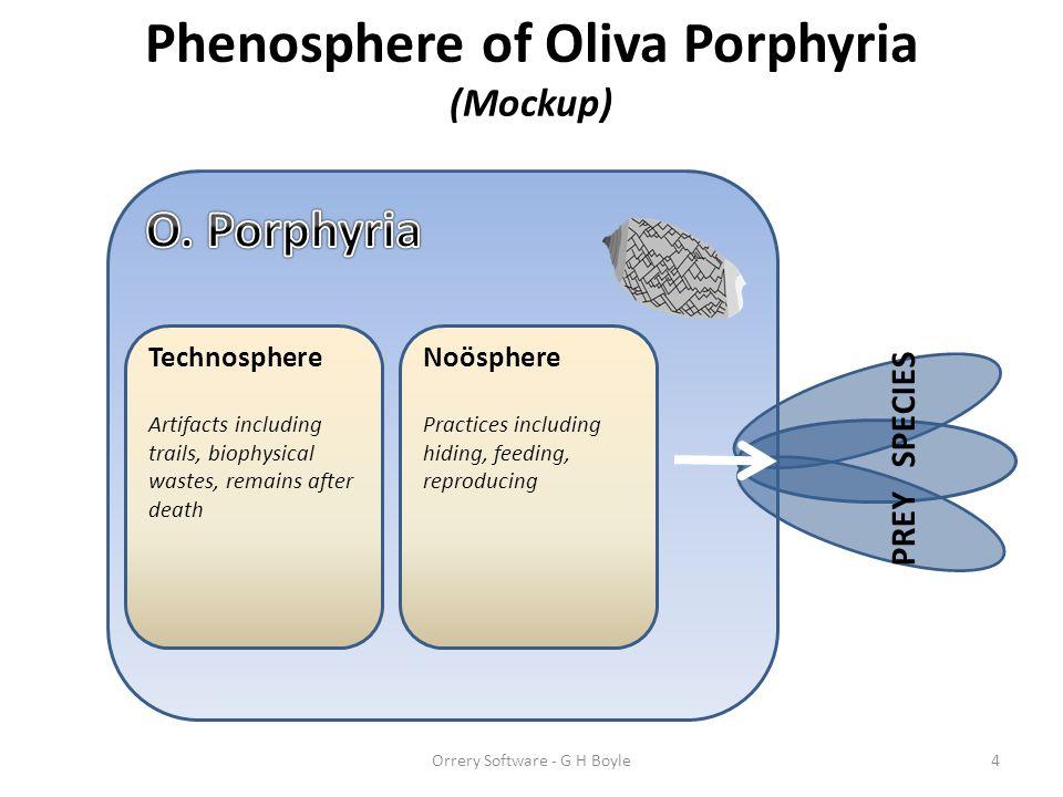 Phenosphere of Oliva Porphyria (Mockup)
