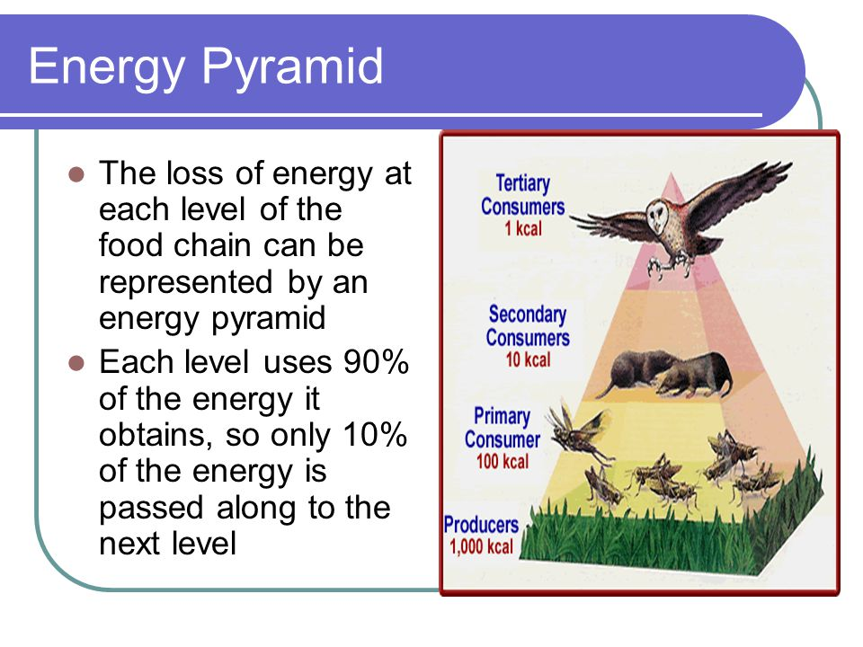 Energy Pyramid The loss of energy at each level of the food chain can be represented by an energy pyramid.