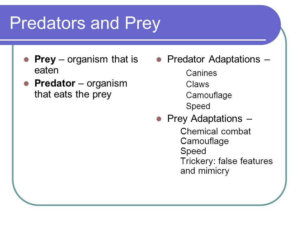 Predators and Prey Prey – organism that is eaten
