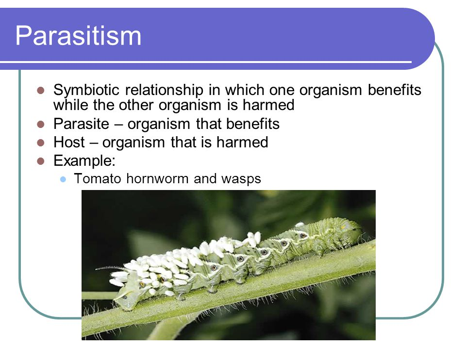 Parasitism Symbiotic relationship in which one organism benefits while the other organism is harmed.