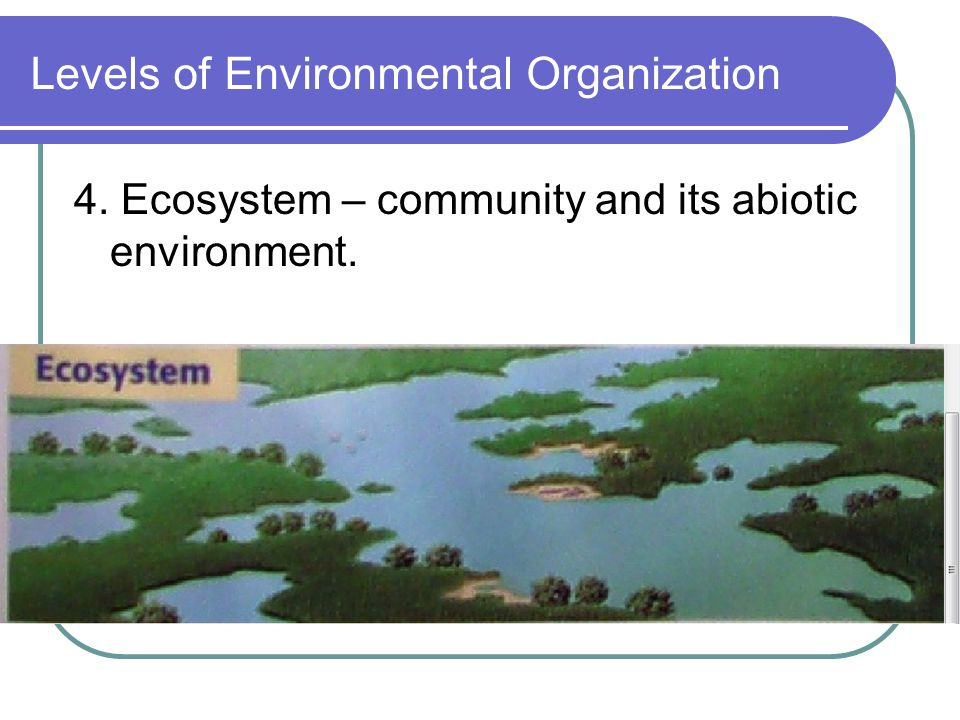 Levels of Environmental Organization