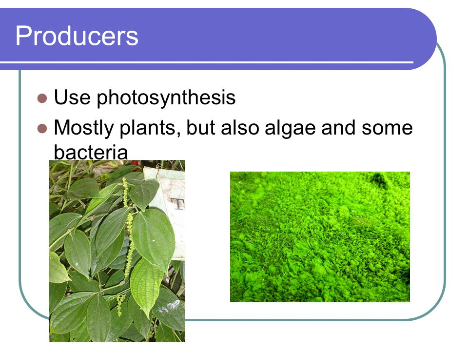 Producers Use photosynthesis