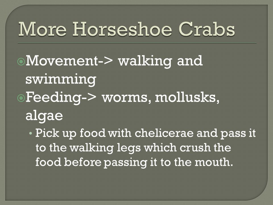 More Horseshoe Crabs Movement-> walking and swimming