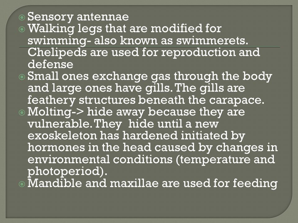 Sensory antennae Walking legs that are modified for swimming- also known as swimmerets. Chelipeds are used for reproduction and defense.