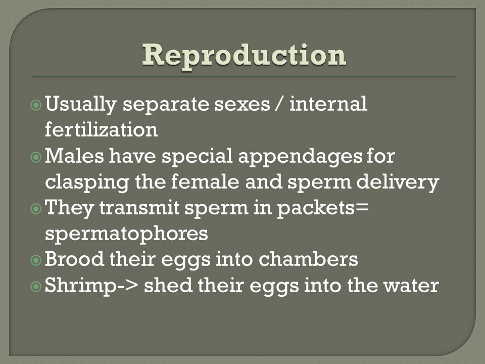 Reproduction Usually separate sexes / internal fertilization