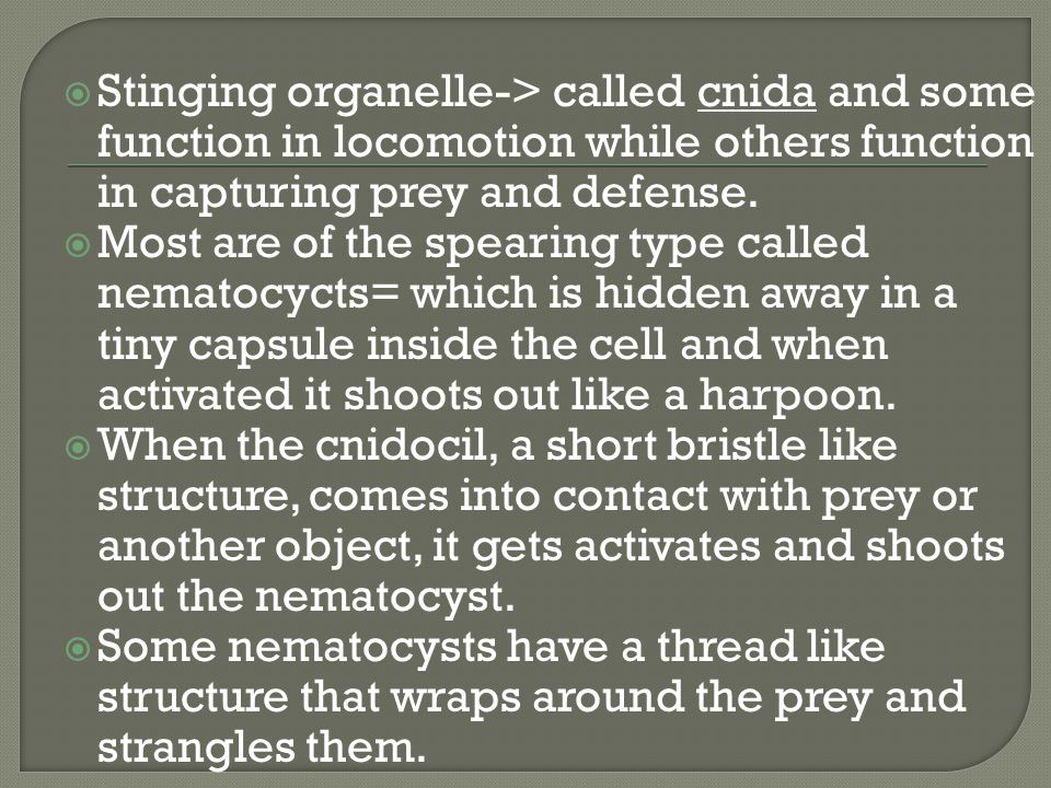 Stinging organelle-> called cnida and some function in locomotion while others function in capturing prey and defense.
