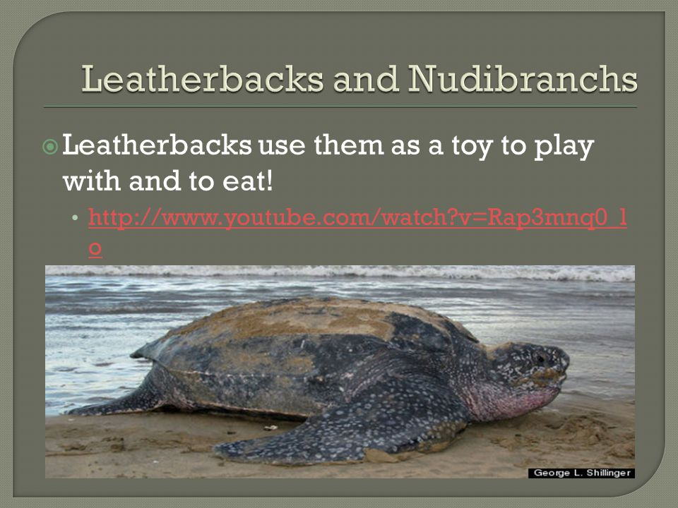 Leatherbacks and Nudibranchs