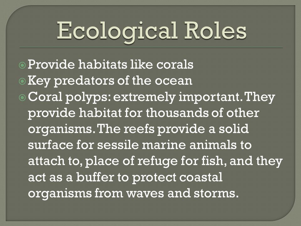Ecological Roles Provide habitats like corals