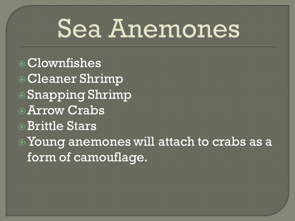 Sea Anemones Clownfishes Cleaner Shrimp Snapping Shrimp Arrow Crabs