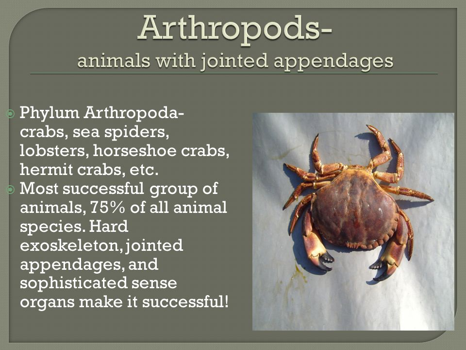 Arthropods- animals with jointed appendages