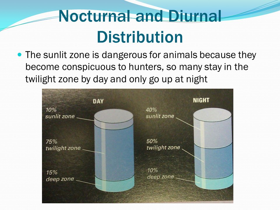 Nocturnal and Diurnal Distribution