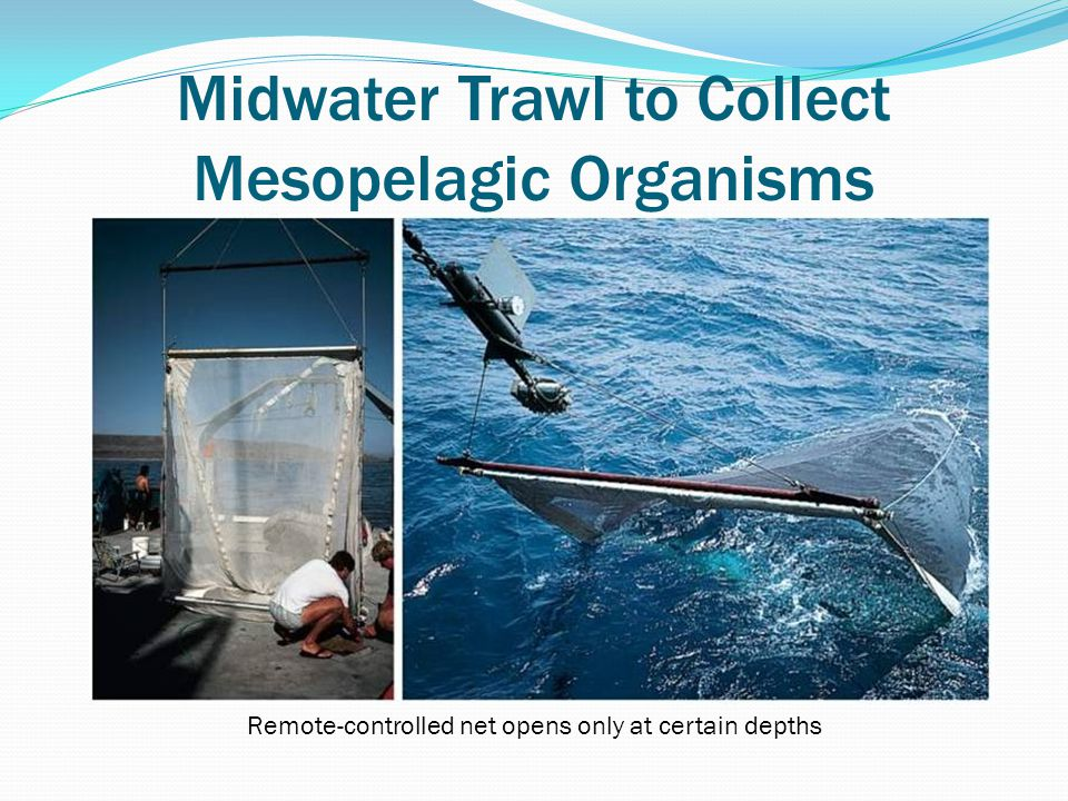 Midwater Trawl to Collect Mesopelagic Organisms