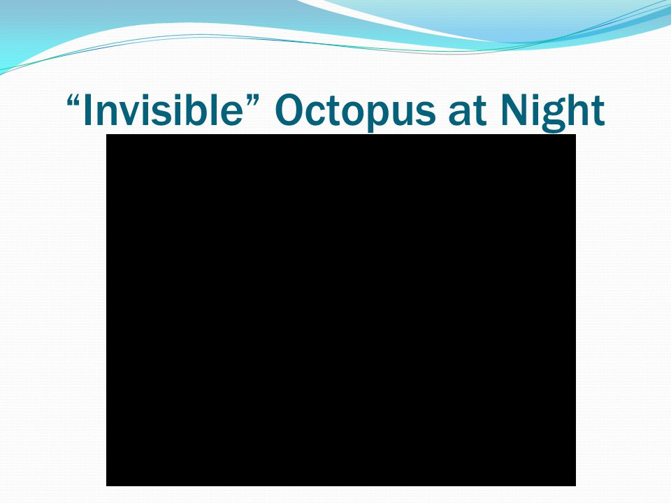 Invisible Octopus at Night