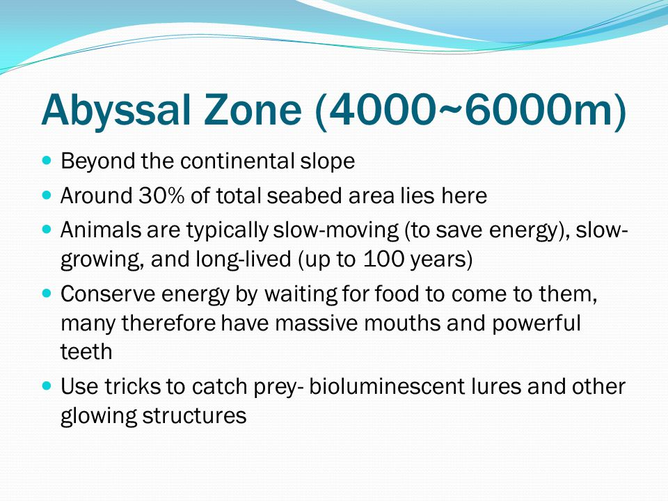 Abyssal Zone (4000~6000m) Beyond the continental slope