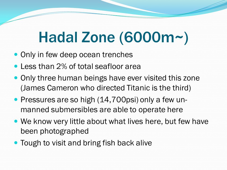 Hadal Zone (6000m~) Only in few deep ocean trenches