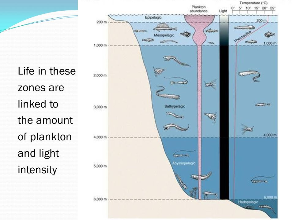 Life in these zones are linked to the amount of plankton and light intensity