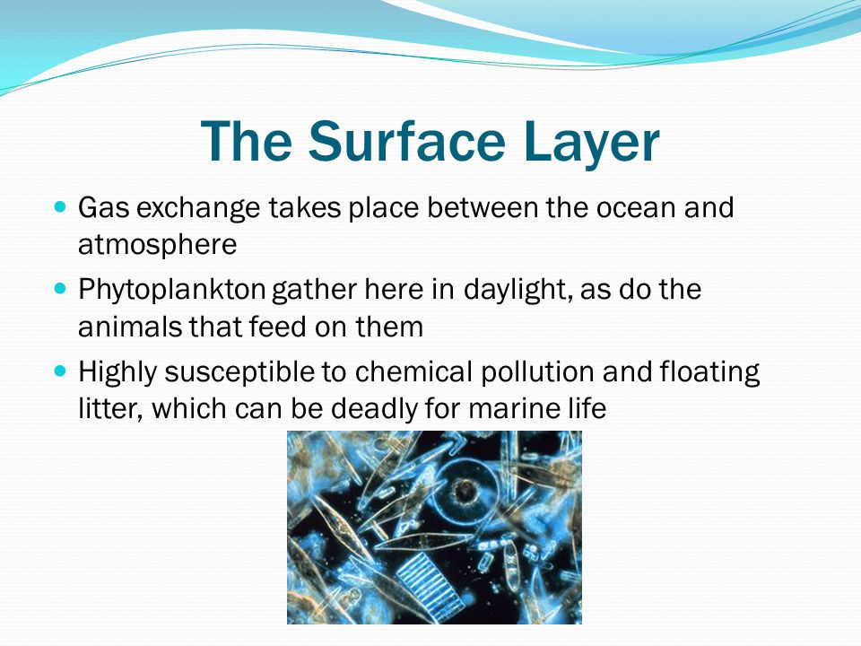 The Surface Layer Gas exchange takes place between the ocean and atmosphere.