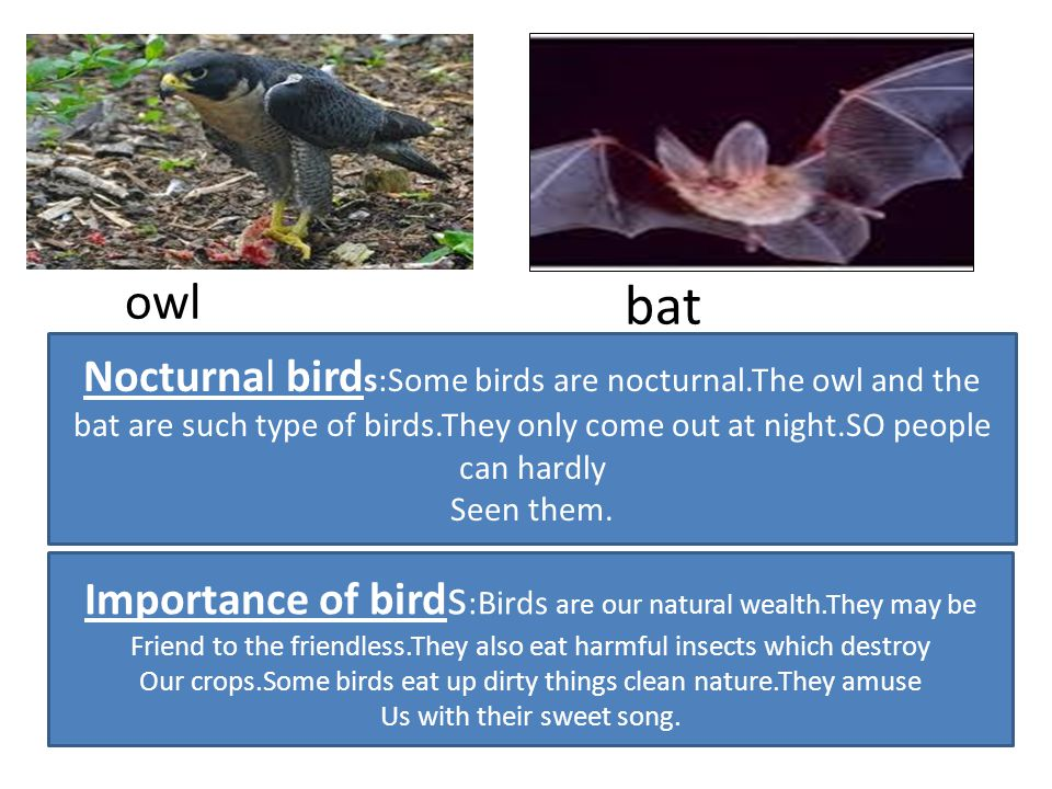 owl bat. Nocturnal birds:Some birds are nocturnal.The owl and the bat are such type of birds.They only come out at night.SO people can hardly.