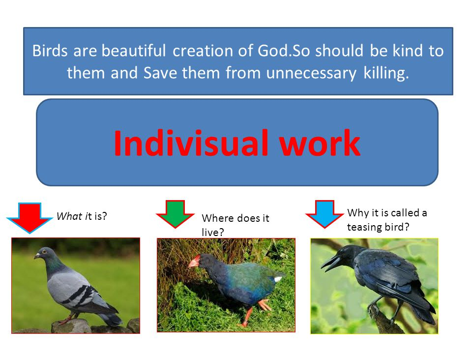 Birds are beautiful creation of God