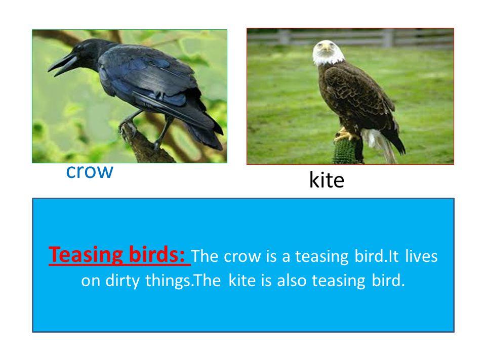 crow kite.