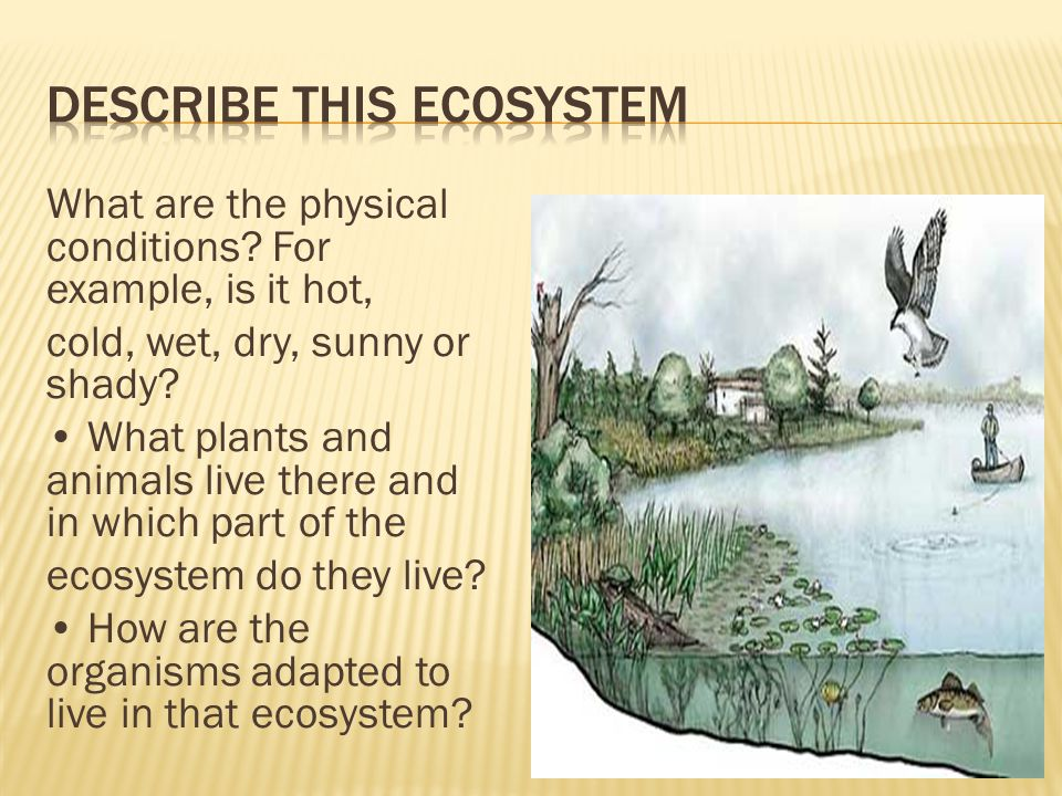 Describe this ecosystem