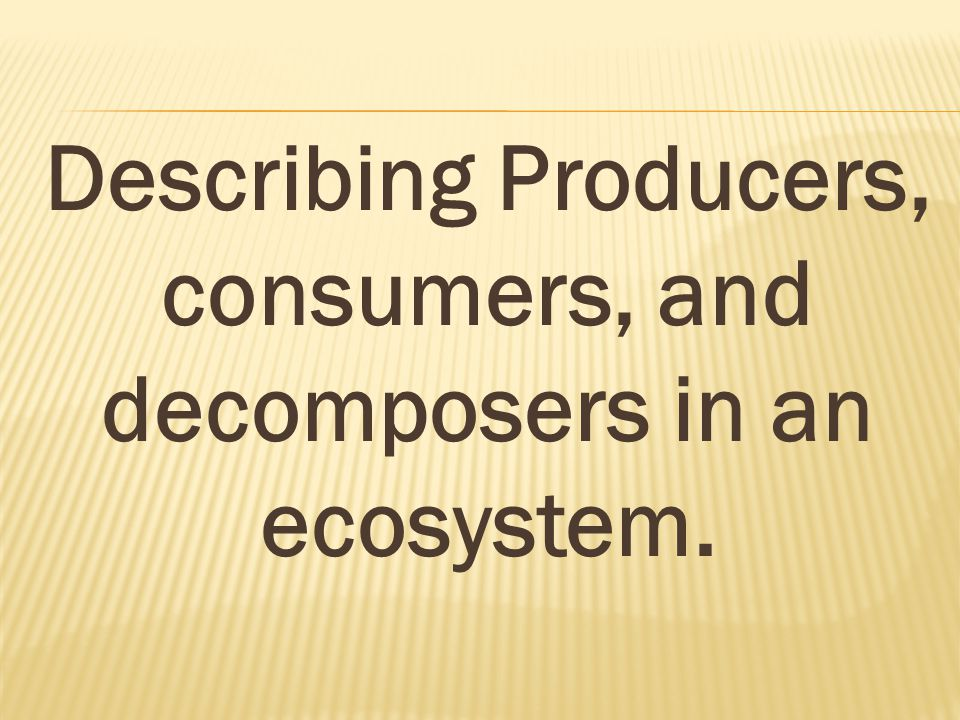 Describing Producers, consumers, and decomposers in an ecosystem.