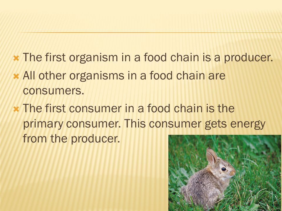The first organism in a food chain is a producer.