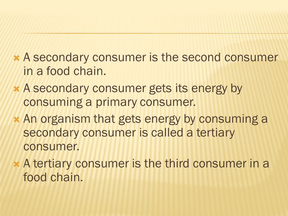 A secondary consumer is the second consumer in a food chain.