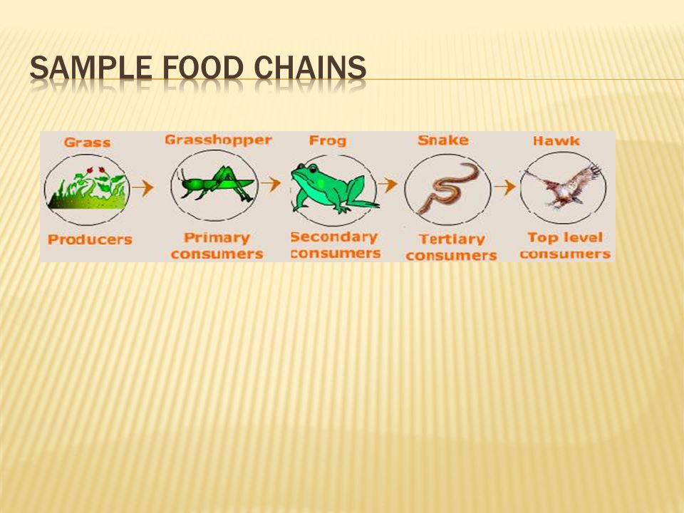 Sample food chains