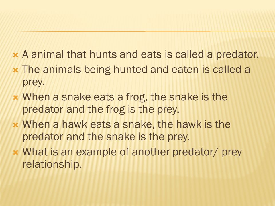 A animal that hunts and eats is called a predator.
