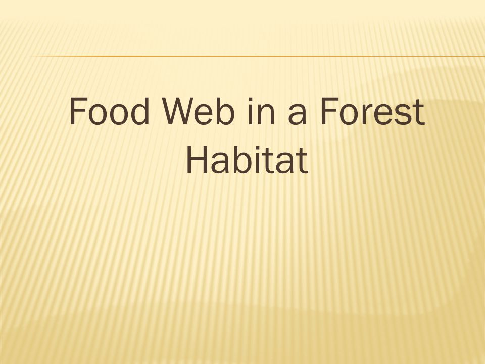 Food Web in a Forest Habitat