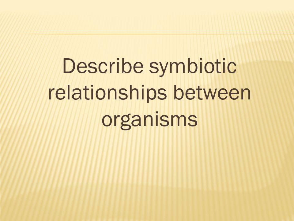 Describe symbiotic relationships between organisms