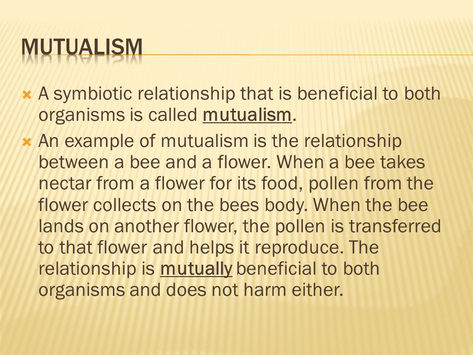 Mutualism A symbiotic relationship that is beneficial to both organisms is called mutualism.