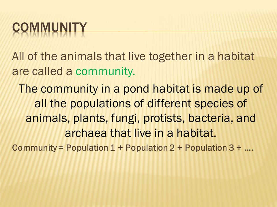 Community All of the animals that live together in a habitat are called a community.