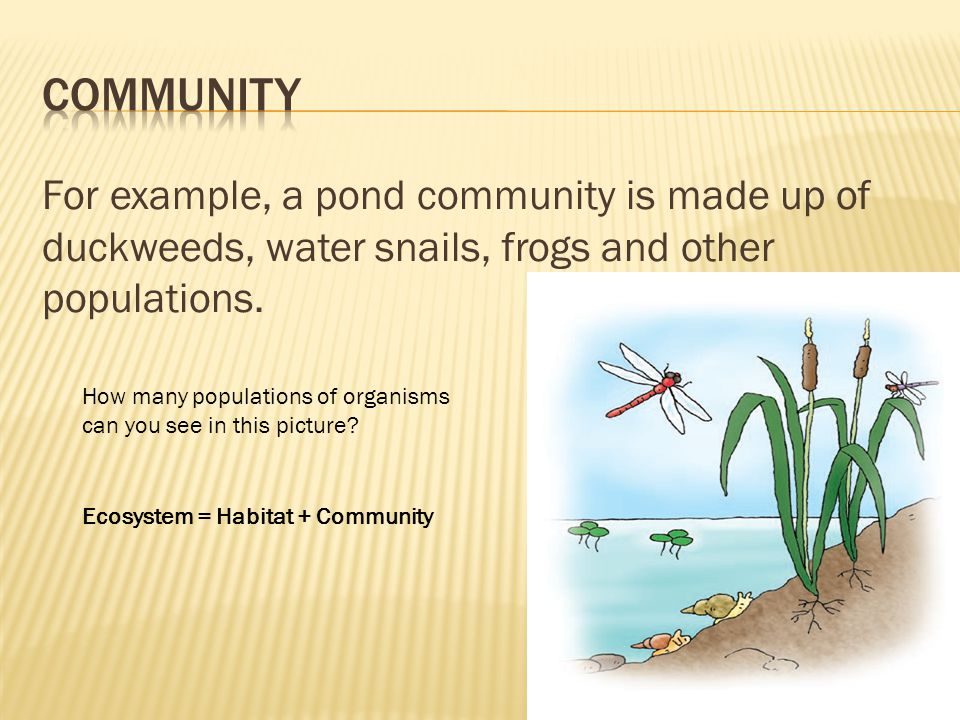 Community For example, a pond community is made up of duckweeds, water snails, frogs and other populations.