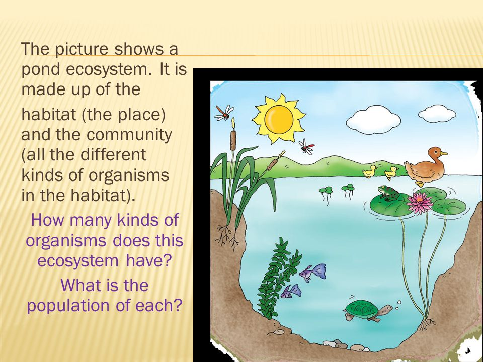 The picture shows a pond ecosystem
