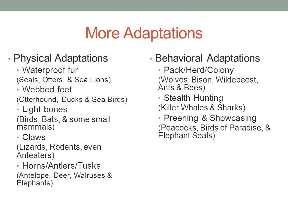 More Adaptations Physical Adaptations Behavioral Adaptations