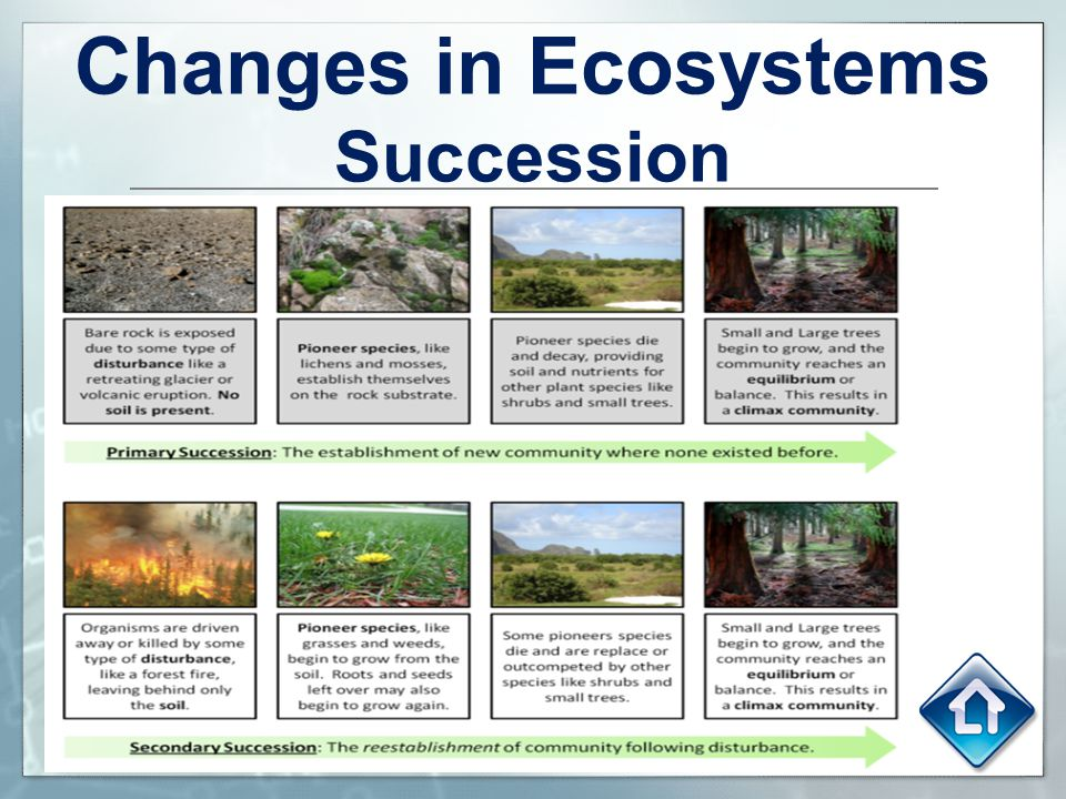 Changes in Ecosystems Succession