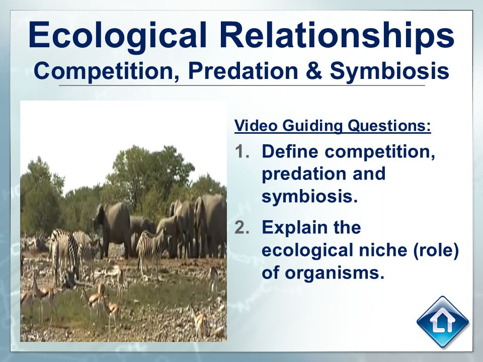 Ecological Relationships Competition, Predation & Symbiosis