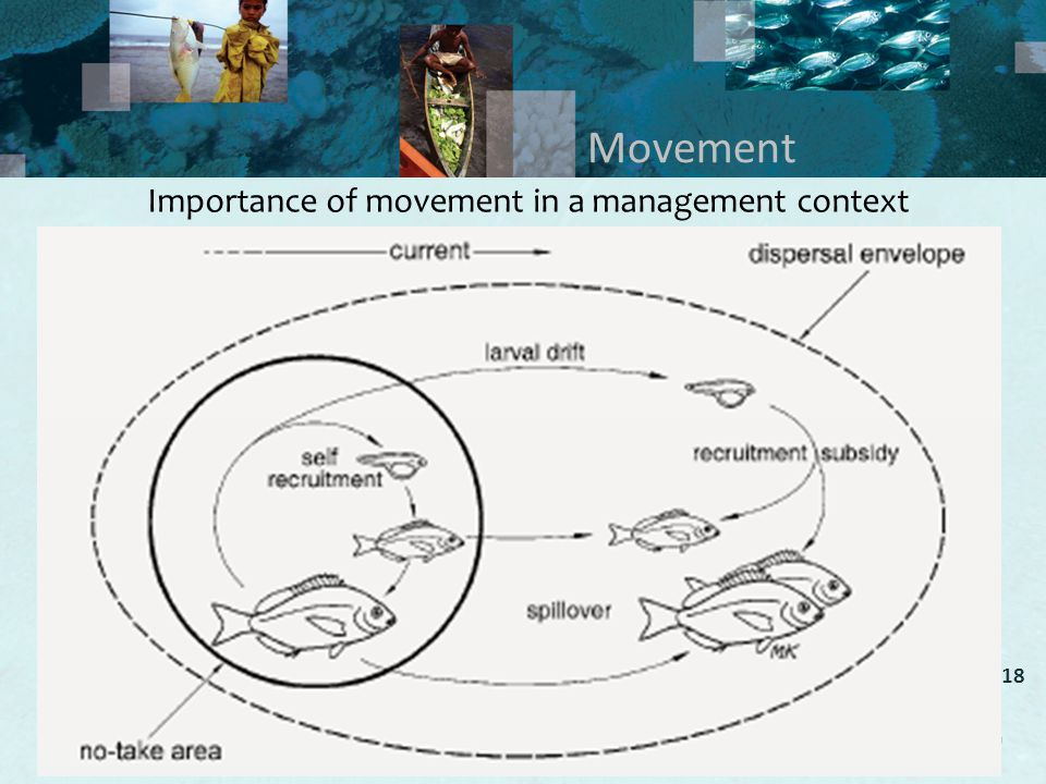 Movement Importance of movement in a management context