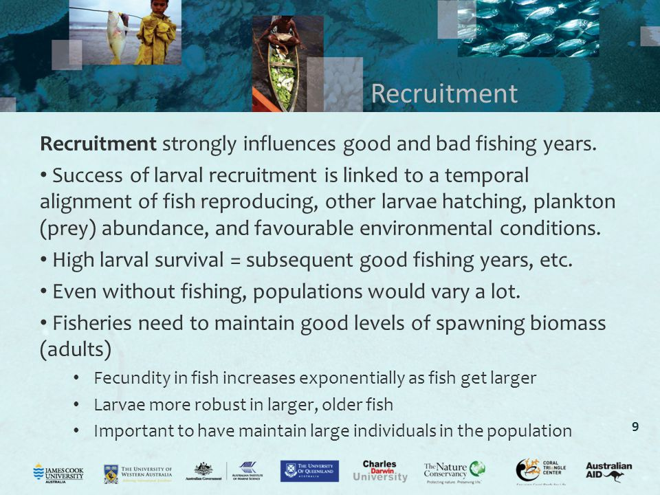Recruitment Recruitment strongly influences good and bad fishing years.