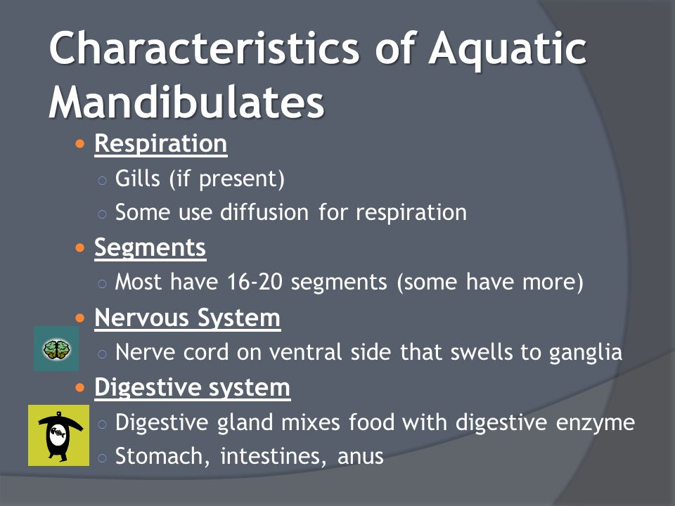 Characteristics of Aquatic Mandibulates