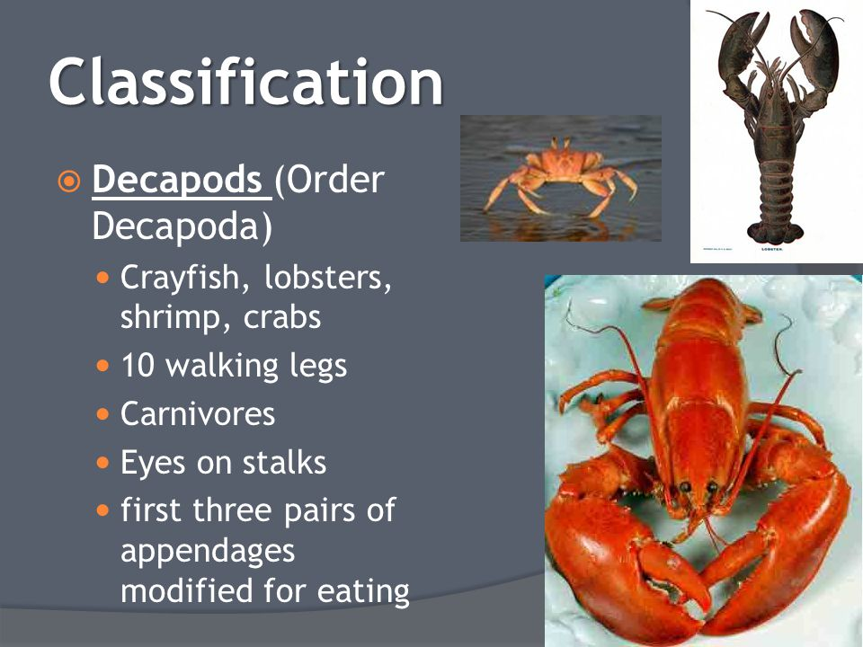 Classification Decapods (Order Decapoda)